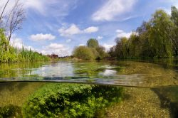 River Itchen by Linda Pitkin