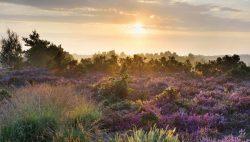 Our-Heathland