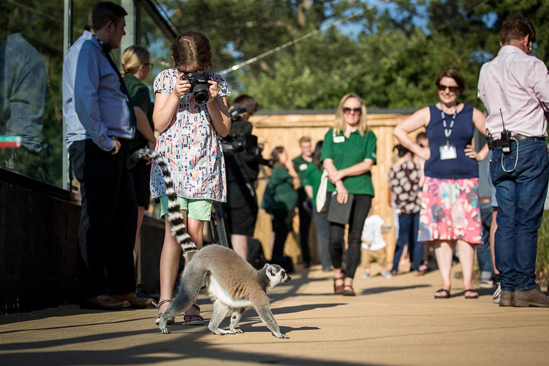 Walk through the Lemur Loop at Marwell Zoo - South Downs National